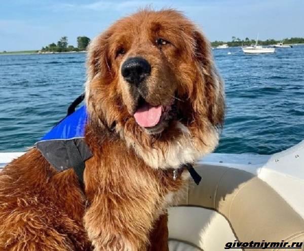 История-о-собаке-названной-в-честь-Великой-Китайской-стены-1