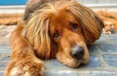 История о собаке, названной в честь Великой Китайской стены