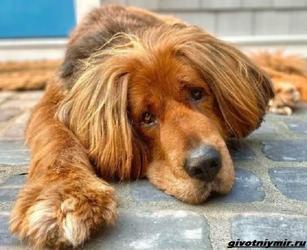 История-о-собаке-названной-в-честь-Великой-Китайской-стены-2