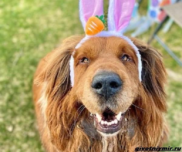 История-о-собаке-названной-в-честь-Великой-Китайской-стены-4