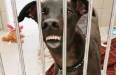 История о собаке с необычной мордой