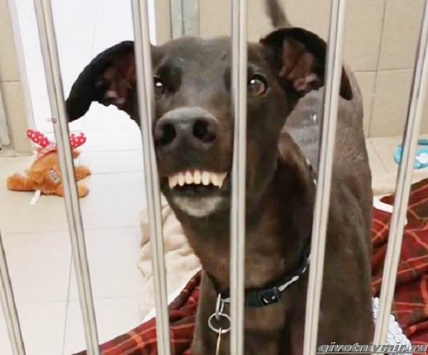 История-о-собаке-с-необычной-мордой-2