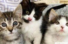 История о трех котятах, которые стали неразлучны