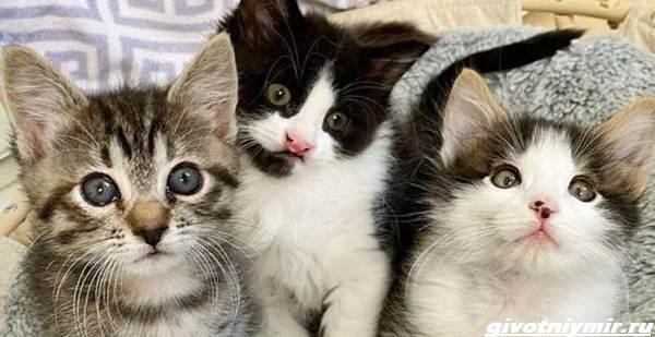 История-о-трех-котятах-которые-стали-неразлучны-1