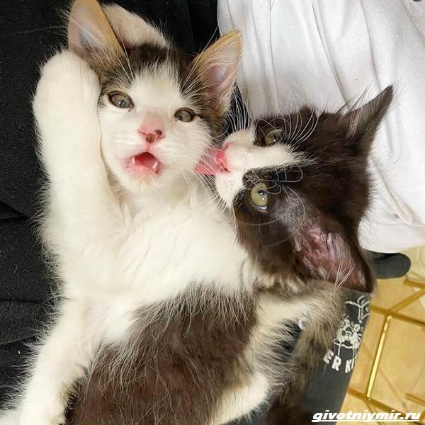 История-о-трех-котятах-которые-стали-неразлучны-3