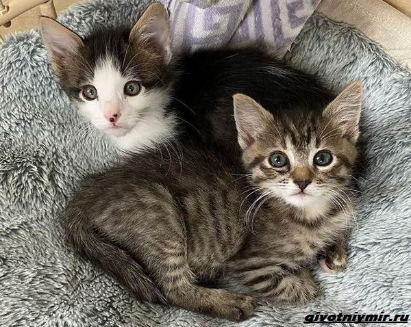 История-о-трех-котятах-которые-стали-неразлучны-4