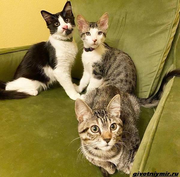 История-о-трех-котятах-которые-стали-неразлучны-5