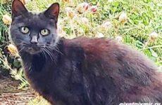 История о умном коте, который спас жизнь своей хозяйке