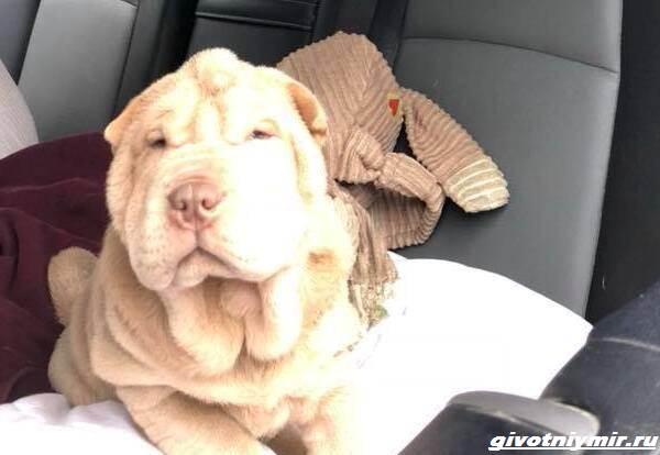 История-об-украденной-собаке-и-человеческой-доброте-1