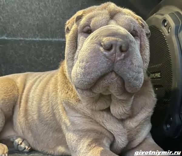 История-об-украденной-собаке-и-человеческой-доброте-3