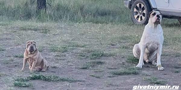 История-об-украденной-собаке-и-человеческой-доброте-4