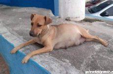 Две истории о собаках, которые пришли в ветеринарную клинику за помощью