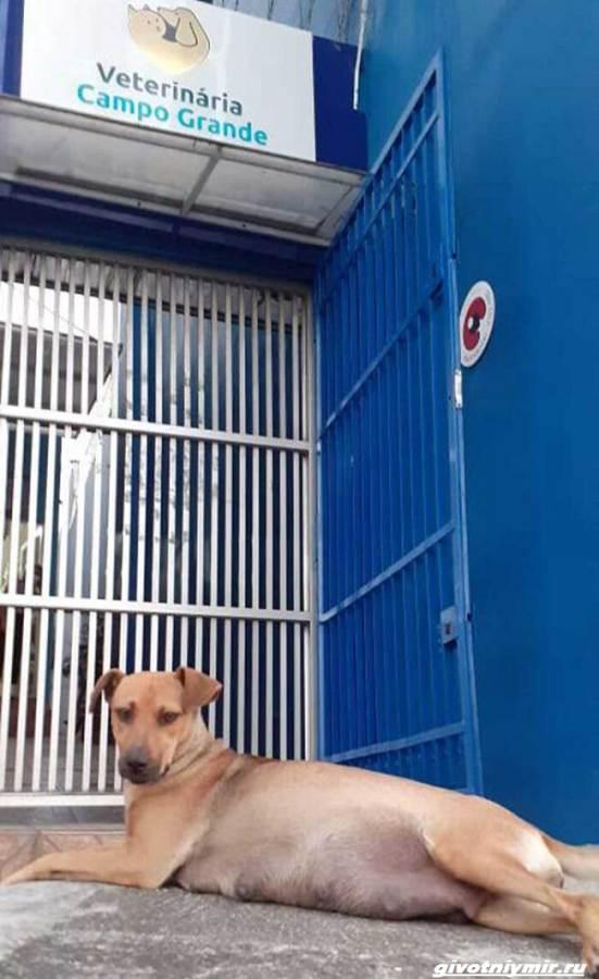 Две-истории-о-собаках-которые-пришли-в-ветеринарную-клинику-за-помощью-2