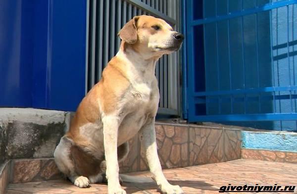 Две-истории-о-собаках-которые-пришли-в-ветеринарную-клинику-за-помощью-4