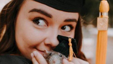 История о домашней крысе, которая поддерживала свою хозяйку-студентку