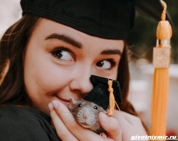 История-о-домашней-крысе-которая-поддерживала-свою-хозяйку-студентку-1