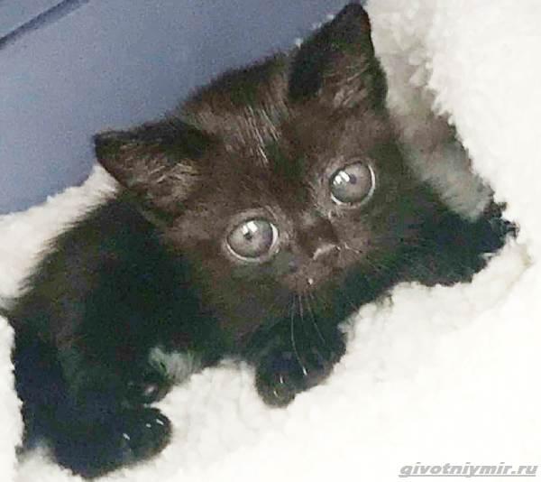 История-о-кошечке-с-необычными-глазами-2