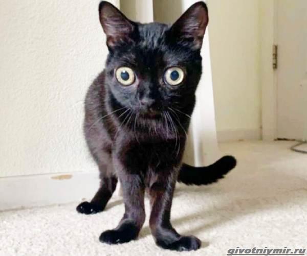 История-о-кошечке-с-необычными-глазами-3