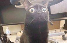 История о кошечке с необычными глазами