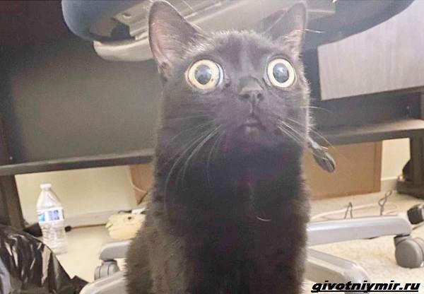 История-о-кошечке-с-необычными-глазами-4