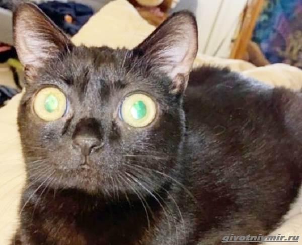 История-о-кошечке-с-необычными-глазами-5