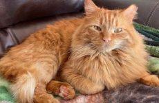 История о рыжем коте, который поверил в доброту человека