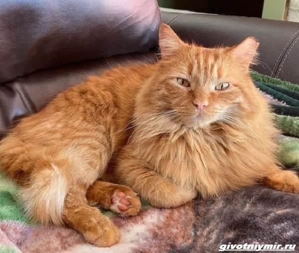 История-о-рыжем-коте-который-поверил-в-доброту-человека-1
