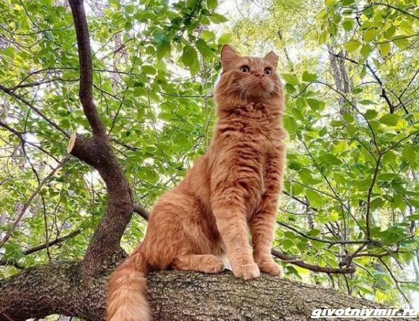 История-о-рыжем-коте-который-поверил-в-доброту-человека-3