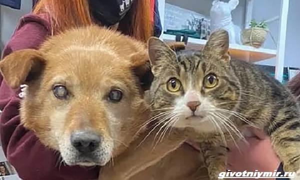 История-о-слепой-собаке-которая-подружилась-с-полосатым-котом-1