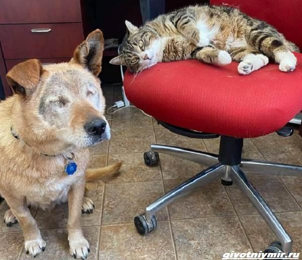 История-о-слепой-собаке-которая-подружилась-с-полосатым-котом-5