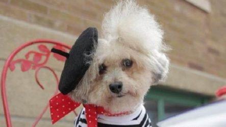 История о собаке, которую бросили хозяева, а теперь всячески балуют