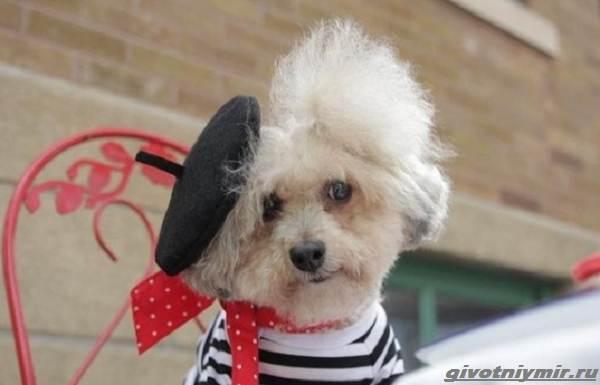 История-о-собаке-которую-бросили-хозяева-а-теперь-всячески-балуют-1