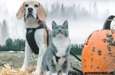История о бигле, кошке и ярких тыквах