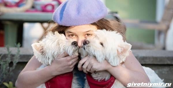 История-о-двух-собаках-которые-живут-с-одним-глазом-1