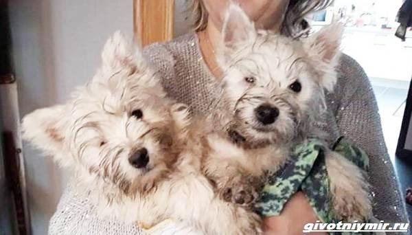 История-о-двух-собаках-которые-живут-с-одним-глазом-2