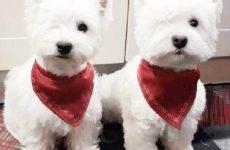 История о двух собаках, которые живут с одним глазом
