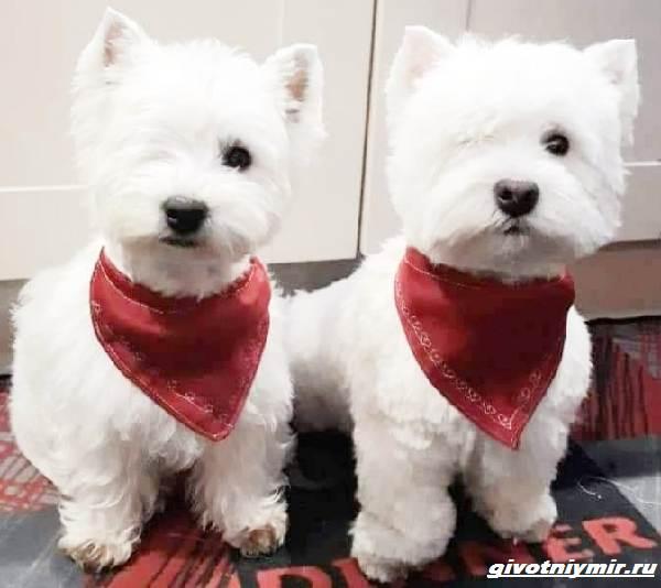 История-о-двух-собаках-которые-живут-с-одним-глазом-3