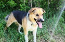 История о собаке, которая помогла хозяйке пережить горе