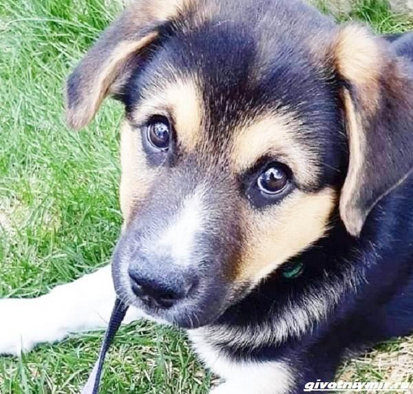 История-о-собаке-которая-помогла-хозяйке-пережить-горе-2