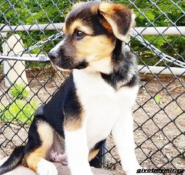 История-о-собаке-которая-помогла-хозяйке-пережить-горе-3