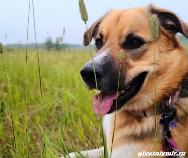 История-о-собаке-которая-помогла-хозяйке-пережить-горе-4