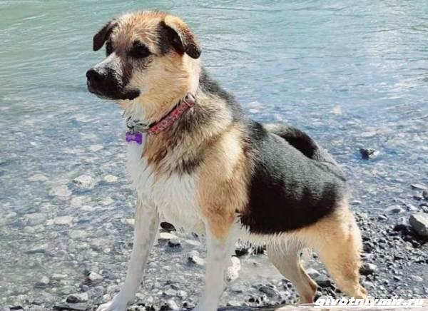 История-о-собаке-которая-помогла-хозяйке-пережить-горе-6