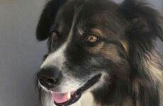 История о собаке, которая спасла свою хозяйку от падающего метеорита